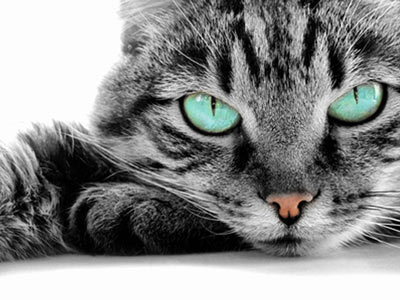 tl_files/pfotenparadies/layout-images/Katze-green-Eyes2.jpg